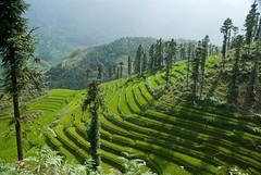 contour lines (beeldmark) Tags: landscape geotagged vietnamese terrace vietnam ricepaddies sapa riceterraces landschap tms contourline sawas tellmeastory việtnam contourlines rijstterrassen vietnamees hoogtelijnen beeldmark hoogtelijn isohypse geo:lat=22330417 geo:lon=103845932