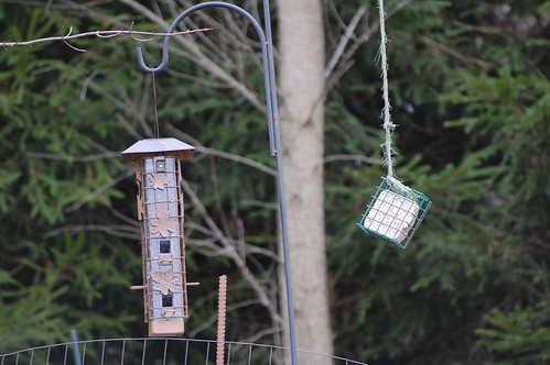 Squirrel-proof birdfeeder