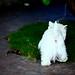 Terrie White Photo 11