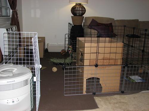 new bunny area 3