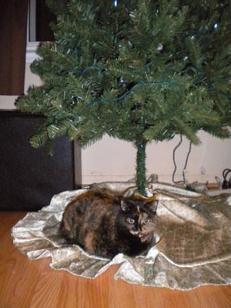 chloe_christmastree2