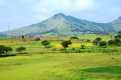 Green Land (welcomejayant) Tags: india green marathi nashik