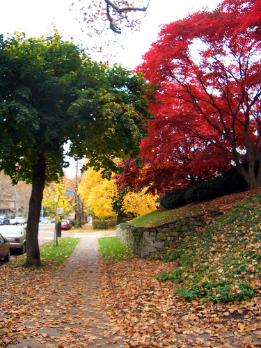 Autumn Trees in Squirrel Hill