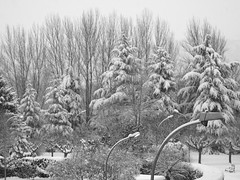 Winter from my window (cctrilla) Tags: trees winter blackandwhite music naturaleza snow blancoynegro nature leaves hojas poem arboles seasons streetlamps nieve nevada olympus leon musica invierno poesia snowfall farolas estaciones cctrilla e520 lacandamia lafurarnalds ljsi empezaraescribirdenuevo