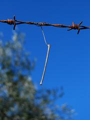 minimal tarzan (sharkoman) Tags: pareidolia tarzan filo ruggine secco appeso arbusto spinato estremit sharkoman