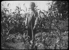 Boy in corn field, Woodbine, New Jersey