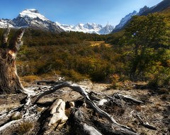 The Deadfall (Stuck in Customs) Tags: park travel blue wild sky patagonia foothills mountain snow cold color tree green nature argentina digital america forest photography march blog high woods flora nikon dynamic stuck natural snowy south scenic peak growth national imaging wilderness root range twisted 2009 hdr trey travelblog customs snowcap deadfall ratcliff stuckincustoms d3x