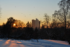 crows from the sky bar (kong niffe) Tags: oslo highrises sn solnedgang botaniskhage oransje osloplaza postgirobygget skygger krker