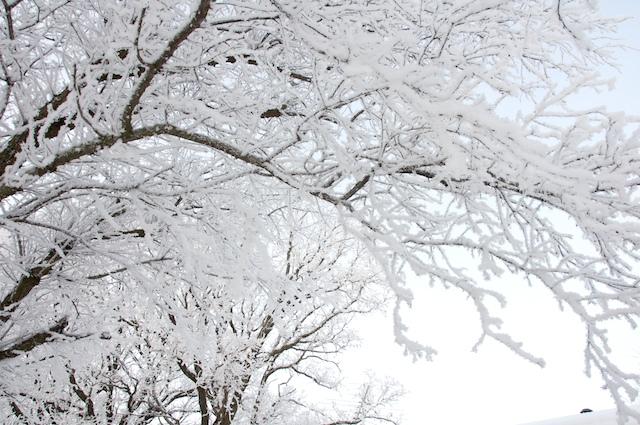 MN snow wonderland