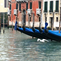 il gabbiano (anabel LIA) Tags: venice venecia venezia gaviota gabbiano
