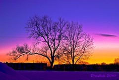 The Treez (Doug Wallick) Tags: trees winter sunset snow minnesota buildings colorful village apartment crystal breathtaking picnik lightroom treez a230 breathtakinggoldaward breathtakinghalloffame