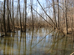 Another swamp shot