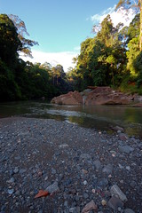 danum valley DSC_1261