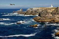 La côte sauvage [Explore'd 03/01/10] (didier95) Tags: mer bretagne paysage morbihan mouette mfcc cotesauvage leuropepittoresque