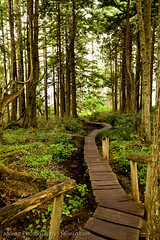 sustainability trail (Jonny Donut Carroll) Tags: wood trees usa green nature us wooden washington spring pretty peace forrest wind path walk trail wa cape winding sustainability flattery