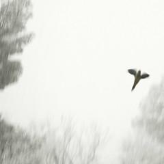 _ ([ZicoCarioca]) Tags: barcelona winter white snow photography photo blurry foto photographie image nieve parrot images photograph carioca zico neu imagery nocomments zicocarioca