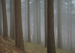 Mount Tabor (Tony Pulokas) Tags: winter tree fog oregon portland 1 day mounttabor douglasfir regionwide