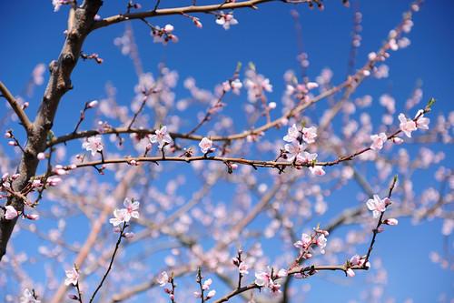 2010-03-27_1049_2_D700