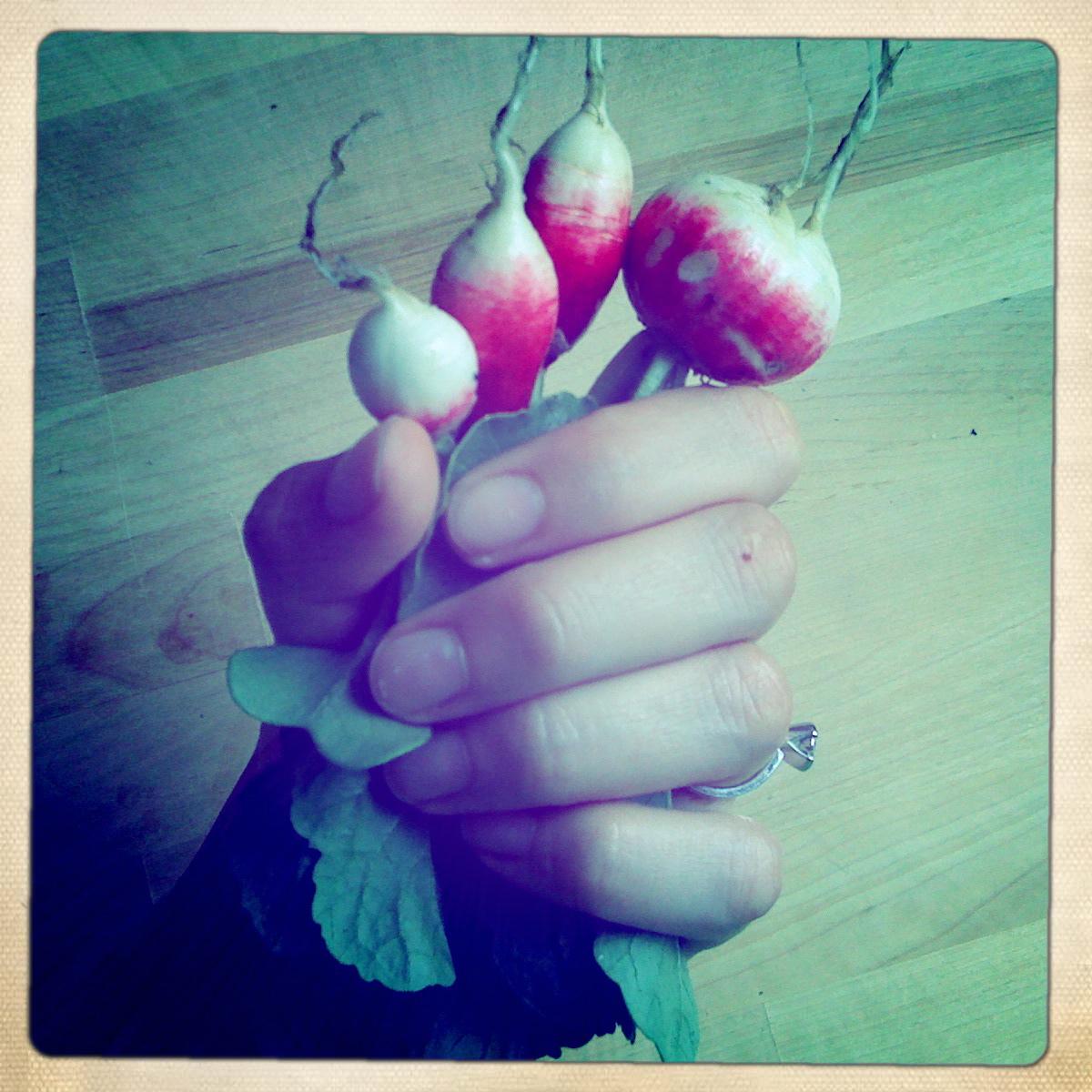 Radish mini-harvest