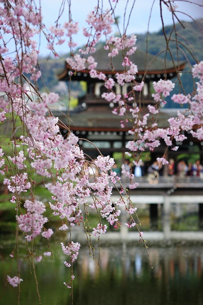 Sakura 2010 #27