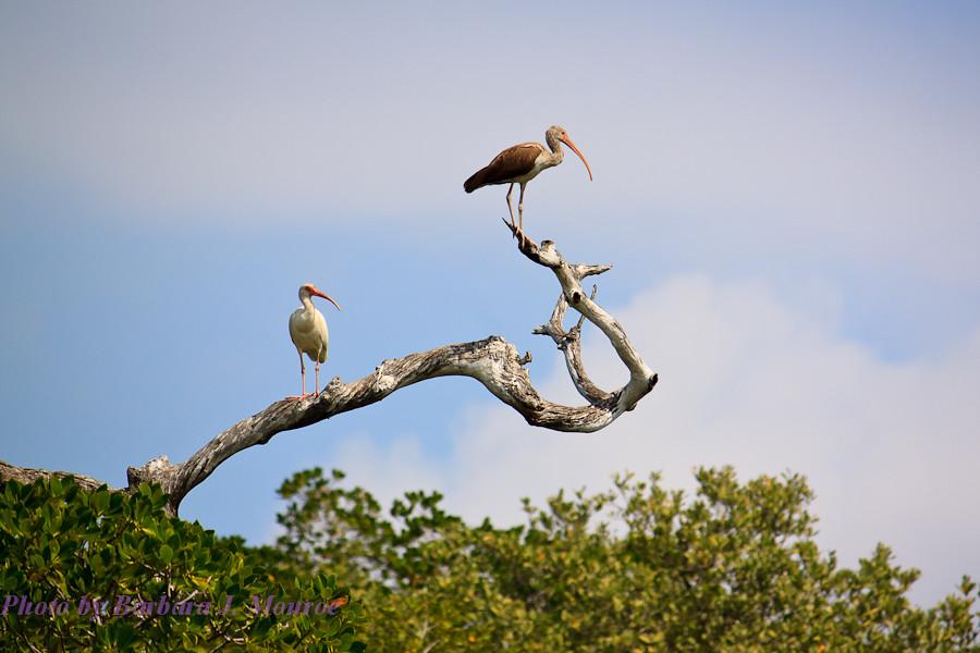 Everglades National Park-10,000 Islands (1 of 16)