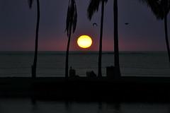 near dark at A Bay (heartinhawaii) Tags: ocean sunset sea silhouette night dark palms hawaii hawaiian hawaiiansunset bigisland fishpond abay anaehoomalubay hawaiisunset kohalacoast hawaiiisland southkohala bigislandsunset nikond3100 bigislandinfebruary hawaiiinfebruary