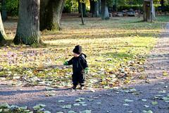 Gusten hittade ett löv