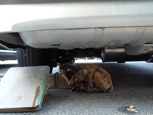 Today's Cat@20091028