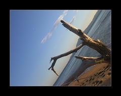 La deliziosa calma preserale..... (* Tweety *) Tags: nuvole mare cielo tweety tronco autunno calma titti sabbia isola impronte revenge23 calmapreserale