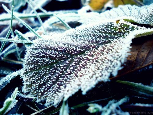 November's leaf is red and sear.--Sir W. Scott