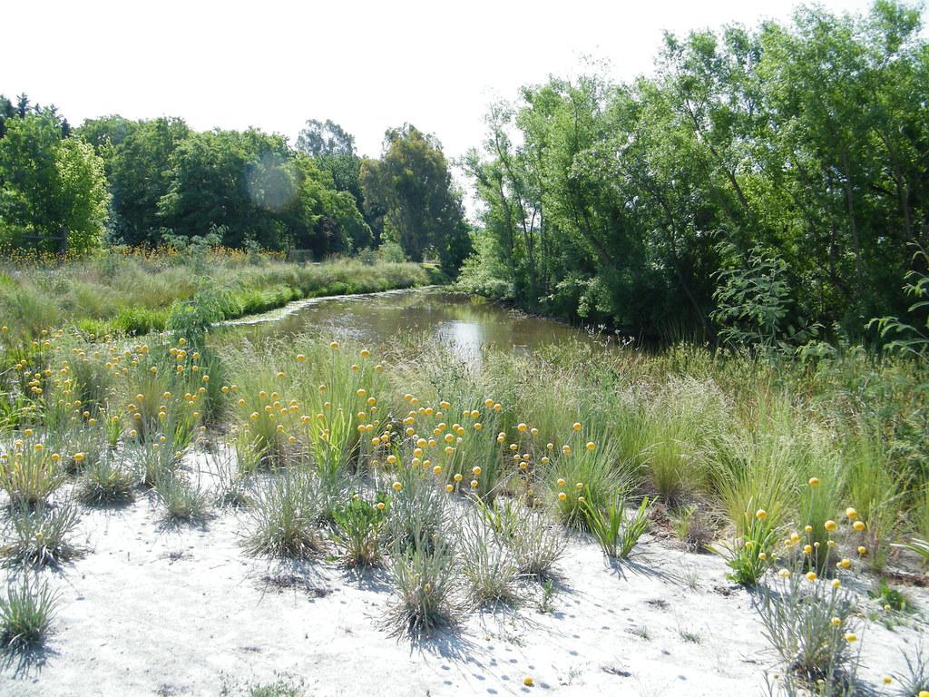 Revegetation at Browns Lagoon