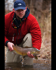 Female Lake Run Brown Trout (lukeCphoto) Tags: brownie flyfishing trout browntrout heroshot trib tribfishing newyorkflyfishing flyfishingphotography lakerunbrown westernnewyorkflyfishing newyorkflyfishingphotography