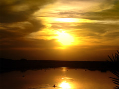 sunset -  (Yasser Abo El Ella) Tags: sunset sky sun lake beauty yellow duck amazing nice redsea egypt  beatiful hurghada   elgouna