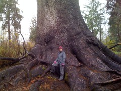 Emily w/world's largest Sitka Spruce