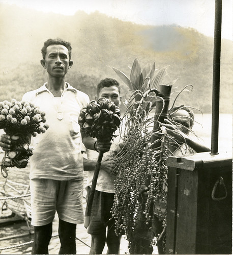 Plant collectors bringing specimens aboard the Cheng Ho