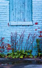 Wall (Billy Wilson Photography) Tags: old city blue autumn ontario canada brick fall digital canon eos rebel ancient brickwall xs soo northern saultstemarie northernontario algoma billywilson