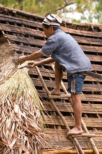 Banaue Ethnic Village Ifugao Repairing Roof of Native House