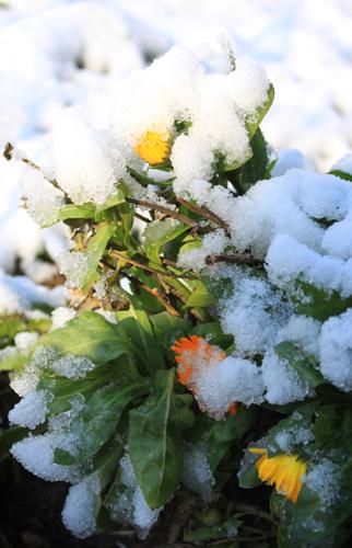 snow- 020x
