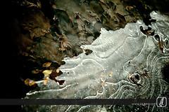 Ice in Vancouver!! (LenaLegkaia-Ho) Tags: vancouver photowalk coalharbour vcpm