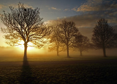 Dawns early light (Mr Grimesdale) Tags: trees mist fog dawn morningmist dawnlight olypus e510 mrgrimsdale stevewallace croxtethpark challengeyouwinner croxtethcountrypark mrgrimesdale