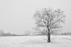 Neve al Parco Nord (LittleSteven65) Tags: park family people parco dog snow milan cold tree sport kids cat construction child gente bambini milano neve albero costruzione freddo gatti animali cani freez sottoilcielodimilano