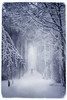 in the cold distance (-justk-) Tags: trees copyright mist snow cold fog forest path ghost explore guide distance theeditors allmyimagesarecopyrighted©allrightsreserveddonotusecopyandeditmyimageswithoutmypermission