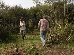 Phil and Roman waging war on the sallow (EuCAN Community Interest Company) Tags: poland 2009 eucan milicz baryczvalley
