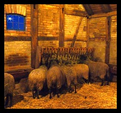 Christmas is over - silence is in the stable again (Eisgrfin (very busy)) Tags: christmas weihnachten zoo silent over stall hannover stable ruhe blueribbonwinner topshots topseven abigfave thesuperbmasterpiece natureselegantshots rubyphotographer eisgrfin theoriginalgoldseal meyershof