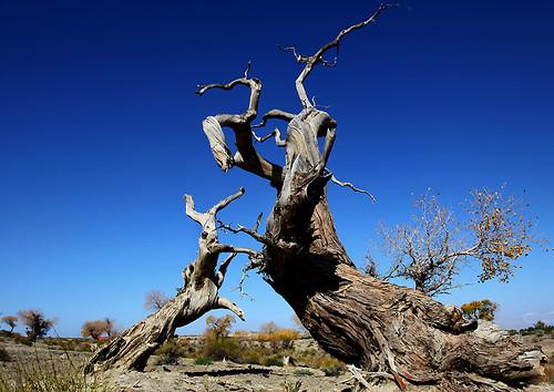 IMG_2257-w tree