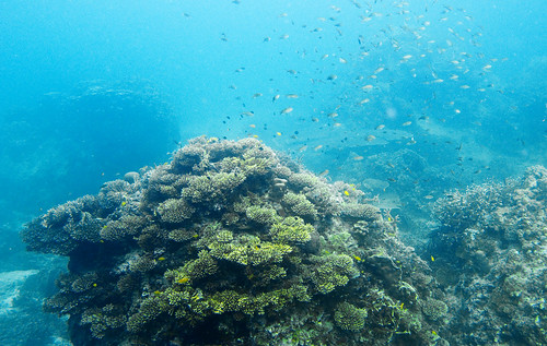 Underwater Gulf of Thailand - Twin Peaks 04
