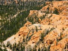 Horse Posse (Stanley Zimny (Thank You for 21 Million views)) Tags: park horses usa southwest animals america utah us nationalpark rocks desert national bryce geology potofgold