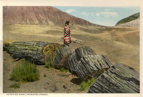 Petrified Giant, Petrified Forest