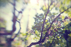 (www.tamcastrillejo.com) Tags: flower color tree texture textura primavera lensbaby arbol spring flor desenfoque sagradafamilia springtime missingspring fueradefoco ltytr1 outouffocus mecansédeesperarte teailoviuxd