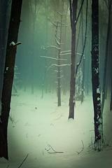 Mystical Forest (LuchezarS) Tags: trees winter mist snow nature fairytale forest nikon nikond70 mystic borovets tistheseason tamron2875 wintermood